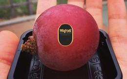 Nho đắt nhất thế giới về Việt Nam giá 6,5 triệu đồng/chùm, cửa hàng có bán lẻ từng trái