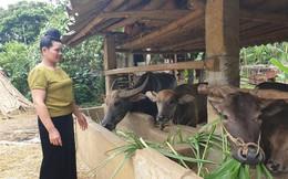 Nông dân trồng mía ở Sơn La và nỗi ám ảnh đường lậu