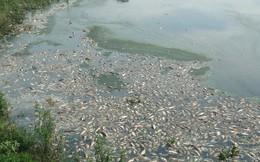Nguyên nhân cá chết hàng loạt nổi trắng hồ Yên Sở ở Hà Nội