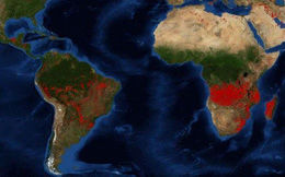 Châu Phi đang bị thiêu đốt, số vụ cháy rừng nhiều gấp 5 lần ở Amazon