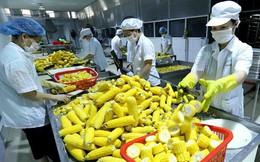 EU thay đổi quy định về kiểm dịch thực vật đối với nông sản nhập khẩu