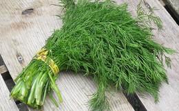 Không chỉ khử mùi tanh cực tốt, loại rau gia vị cực dễ trồng trong vườn này sau là thần dược chữa bệnh vào mùa se lạnh