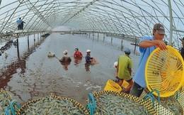 Xuất khẩu vào Mỹ: Doanh nghiệp Việt cần lưu ý gì?