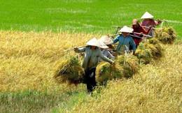 """Giải """"cơn khát"""" vốn ngành lúa gạo"""