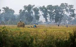 Khói đốt rơm rạ đang bủa vây ngoại thành Hà Nội