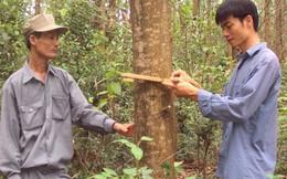 Dăm gỗ giá rẻ bèo!