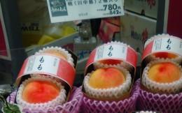 Bên trong vườn đào tiên Nhật Bản giá gần một triệu đồng/cặp