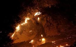 Hàng trăm căn nhà ở California bị thiêu rụi do cháy rừng