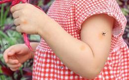 Số ca mắc sốt xuất huyết gia tăng và có xu hướng nặng: Cảnh báo chu kỳ của đỉnh dịch vào tháng 10 và 11