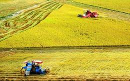 Bộ Tài chính xin miễn, giảm 7.500 tỷ đồng thuế sử dụng đất nông nghiệp