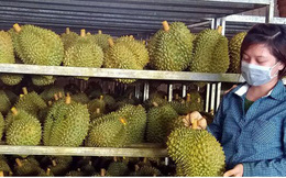 """Vì sao nhiều hàng Việt Nam xuất khẩu bị """"gây khó""""?"""