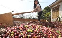 Giá cà phê trên thị trường quốc tế dự báo tăng chóng mặt