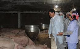 Găm hàng đẩy giá thịt lợn, Bộ trưởng cảnh báo 'gậy ông đập lưng ông'
