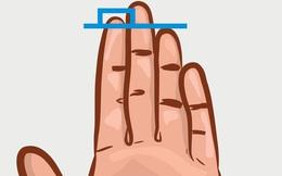 Chiều dài ngón trỏ và ngón đeo nhẫn tiết lộ sự thành đạt, khả năng làm lãnh đạo, ưu – khuyết điểm của bạn!