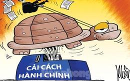 Lợn bị cấm ăn bèo, nuôi trùn quế bị phạt 50 triệu: Ai 'đẻ' quy định gây khó dân?