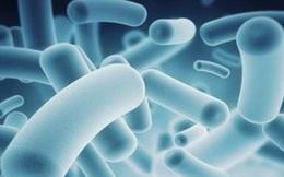 Bé trai 22 tháng tuổi ở Hải Dương tử vong do nhiễm vi khuẩn không xác định loài