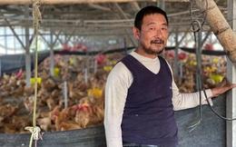 Người nuôi gà Trung Quốc cũng thấm đòn từ dịch tả lợn châu Phi
