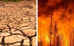 Thế giới sẽ đối mặt với hàng loạt thảm họa nếu rừng Amazon cháy rụi: 90% bệnh tật không có thuốc chữa, 50% loài sinh vật bị tiêu diệt