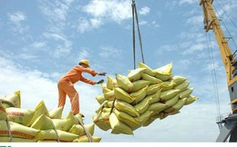 Năm 2019, xuất khẩu gạo sụt giảm 300 triệu USD