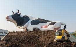 Thị trường 1,4 tỷ dân Trung Quốc sẽ là động lực tăng trưởng mới cho ngành sữa Việt Nam?