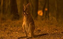 Những hiểu lầm từ vụ cháy rừng kinh hoàng tại Úc