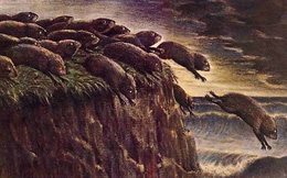 Câu chuyện bầy đàn của loài chuột Lemming và bài học kinh điển trong đầu tư chứng khoán