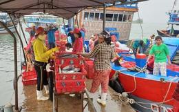 """Tôm cá đầy khoang, ngư dân xứ Quảng bội thu """"lộc biển"""" đầu năm"""