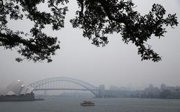 """Ngập bụi mịn vì cháy rừng, Sydney đang trở thành """"phòng thí nghiệm"""" của cả thế giới"""