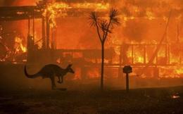 Quy mô đáng sợ của cháy rừng Australia: Gấp đôi diện tích một bang của nước Mỹ
