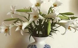 Cận Tết, điểm danh lại những loại hoa đẹp rực rỡ nhưng phải hết sức thận trọng vì có thể khiến mất trí nhớ thậm chí gây chết người rất nhanh