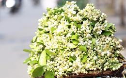 Hoa bưởi đầu mùa xuống phố, thơm nồng nàn khắp phố phường Hà Nội