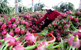 Nông sản lại ồ ạt lên cửa khẩu, Bộ Công Thương khuyến cáo khẩn
