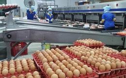 Công bố hạn ngạch thuế quan nhập khẩu muối, trứng gia cầm năm 2020