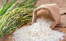 Dịch Covid-19 sẽ tác động thế nào đến thị trường lúa gạo Việt Nam và thế giới?