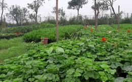 Sau bất động sản, Apec Group tìm hướng đi mới thời covid-19 khi công bố lấn sân nông nghiệp hữu cơ theo mô hình kinh tế chia sẻ