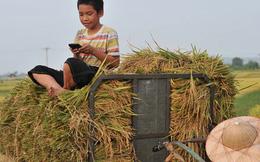 Bộ trưởng Nguyễn Mạnh Hùng: Năm 2020 là năm phổ cập điện thoại thông minh thương hiệu Việt đến 100% người dân