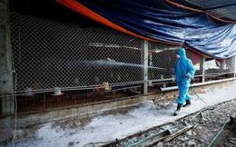 Cả nước có 11 tỉnh, thành phố xuất hiện dịch cúm gia cầm