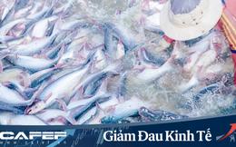 Thủy sản Mekong (AAM): Nguồn thu xuất khẩu giảm, quý 1 báo lãi 666 triệu đồng
