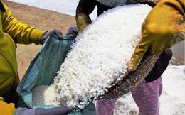 Bán 50kg muối chỉ đủ mua 2kg gạo, diêm dân Sa Huỳnh khóc ròng