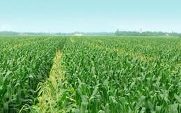 Chuyển giao vùng thị trường 13 tỉnh ĐBSCL về cho Vinaseed, SSC báo lãi quý 1 giảm 20%