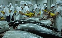 Xuất khẩu cá ngừ sang các thị trường lớn đồng loạt giảm mạnh do dịch Covid-19