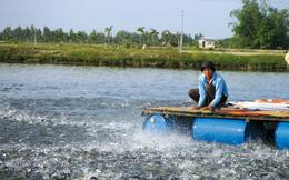 Thủy sản Nam Việt (ANV) báo lãi hơn 43 tỷ đồng quý 1, hoàn thành 22% kế hoạch năm