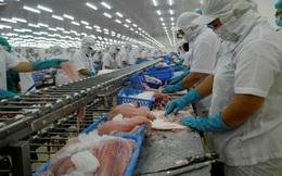 VASEP: Xuất khẩu cá tra sang ASEAN chờ hồi sinh sau dịch Covid-19
