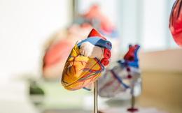 Những bí mật cực thú vị về trái tim và dòng máu mà suốt bao năm nay bạn vẫn chưa biết đến