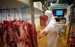 Pháp lo ngại các lò mổ gia súc có thể trở thành ổ dịch COVID-19