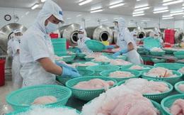 Giá cá tra ổn định chờ tính hiệu thị trường