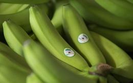 HAGL Agrico (HNG): 68 nhà đầu tư cá nhân mua vào 200 tỷ trái phiếu, lãi suất 9,5%/năm đảm bảo bằng vườn cây ăn quả