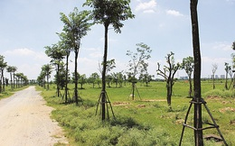 HoREA hoan nghênh Bộ Tài nguyên Môi trường sửa đổi Dự thảo nghị định mới, cho phép phân lô bán nền tại các huyện ngoại thành Hà Nội, TPHCM