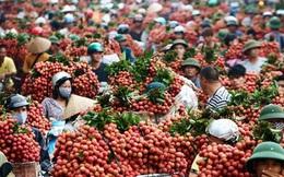 Ảnh hưởng dịch Covid-19, vải tươi Việt Nam có nguy cơ lỡ hẹn sang Nhật Bản