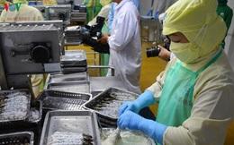 Cơ hội xuất khẩu cho sản phẩm tôm nước lợ sau dịch Covid-19 là rất lớn